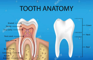 come-è-fatto-un-dente-studio-dentistico-marina-anselmi